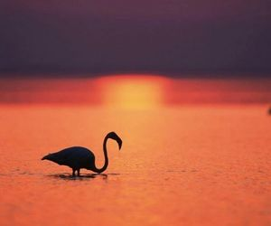 pink, beach, and flamingo image