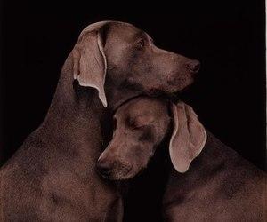 dog, photography, and animal image