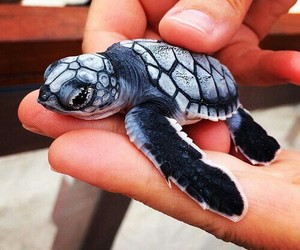 turtle, animal, and baby image