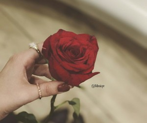 hand, red rose, and rose image