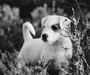 black&white, dog, and puppy image