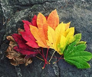 autumn, colors, and leaves image