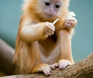 monkey, animal, and cute animals image