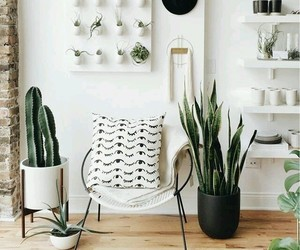 plants, room, and white image