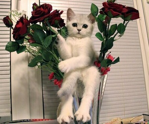 cat, rose, and kitten image