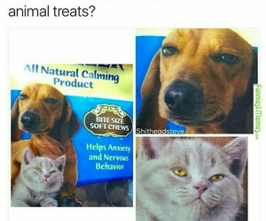 funny, lol, and animals image