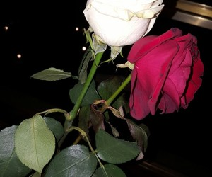 passion, roses, and Valentine's Day image