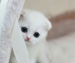 cat, white, and cut image