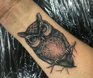 animals, beautiful, and owl image