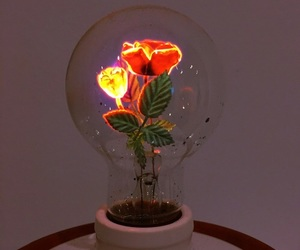 flowers, aesthetic, and light image