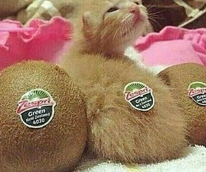 cat, kitten, and kiwi image