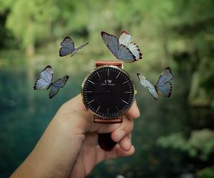 beautiful, creative, and butterflies image