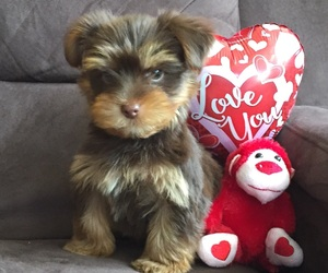 adorable, puppy, and valentine image
