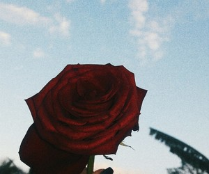 roses, skype, and love image