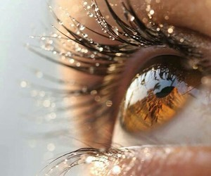 brown, eyes, and yeux image