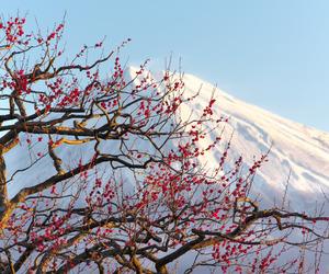japan, Nippon, and plum image