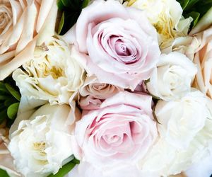 beautiful, flower, and pink roses image