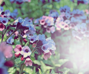 blue, flower, and flowers image