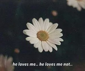 flower, flowers, and he loves me image