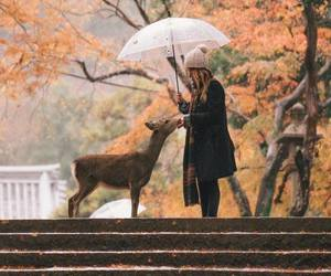 autumn, deer, and girl image