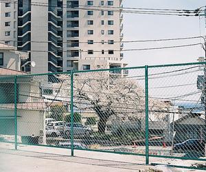 cherry blossom tree, Fences, and sun image
