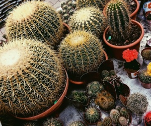 cactus, day, and flower image