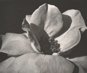 black and white, aesthetic, and flowers image