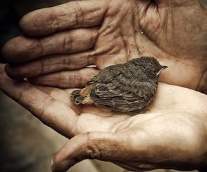 bird, hands, and love image