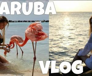 animals, bikini, and aruba image