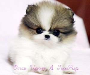 teacup, cute, and animals image