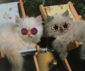 cat, grunge, and sunglasses image