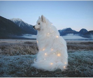 tumblr and sparkly pupper image