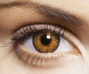 brown, eyes, and ojo image