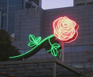 rose, light, and neon image