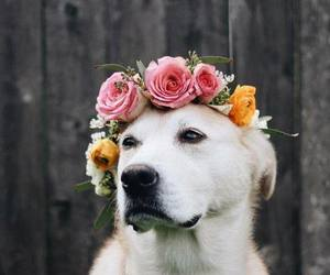 cute, dog, and roses image