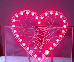 rose, pink, and neon image