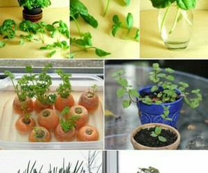 gardening and tips image