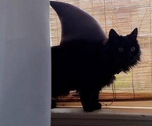 cat, cats, and shark image