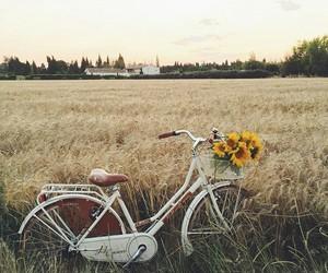 bike, flowers, and vintage image