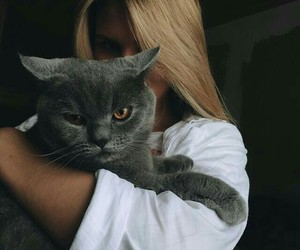 angry cat, cat, and blonde image