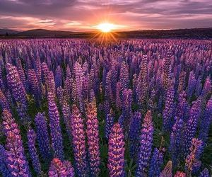 flowers, purple, and sunset image