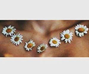 flowers, daisy, and collarbones image