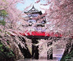 japan, sakura, and amazing image