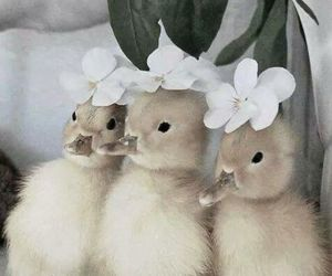 adorable, crown, and ducks image