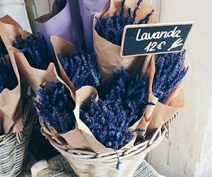 flowers, paris, and purpul image