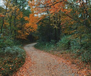 fall, forest, and nature image