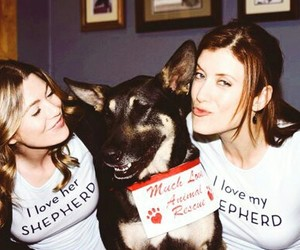ellen pompeo, kate walsh, and grey's anatomy image