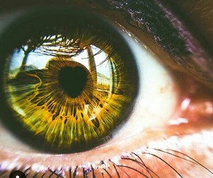 eyes, colors, and yellow image