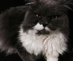 animal, miau, and mrrr image