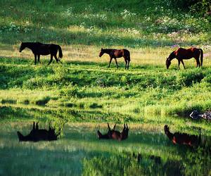horse, animal, and beautiful image
